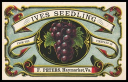 F. Peters Vineyard / Ives Seedling (grapes)