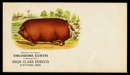Theodore Curtis, Breeder of High Class Duroc Hogs