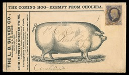 L. B. Silver Company / Improved Chester Swine